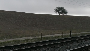 TrainTree